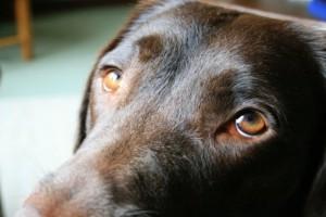 Ηράκλειο: Σώθηκε ο σκύλος που πέταξαν στην θάλασσα!