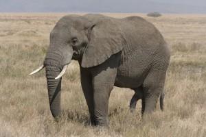 Ο ελέφαντας και το κουνούπι... το ανέκδοτο της ημέρας! (24/7/19)