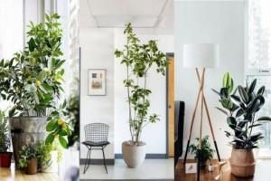 5+1 φυτά που χαρίζουν... οξυγόνο!