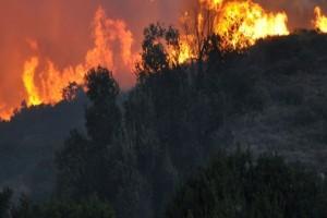 Συναγερμός: Φωτιά στην Αχαΐα!
