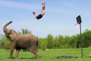 Εντυπωσιακά καρφώματα με τη βοήθεια ενός… ελέφαντα!