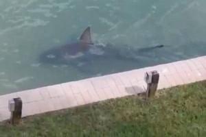 Τρόμος: Ξύπνησε και είδε έναν...καρχαρία στην πισίνα του!