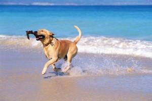 Αυτές είναι οι pet friendly παραλίες στην Αθήνα για εσάς και τον σκύλο σας!