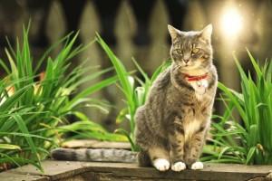 """Η γάτα """"Χάτσικο"""" που περιμένει ένα χρόνο στο ίδιο σημείο τους ιδιοκτήτες της!"""
