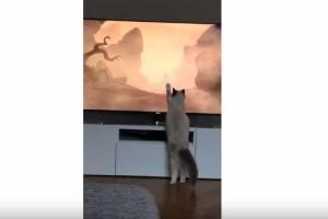 Γάτα βλέπει το θάνατο του Μουφάσα και..το διαδίκτυο λιώνει!