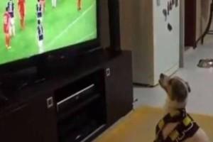 Δεν υπάρχει απλά! Δείτε τον σκύλο που πανηγυρίζει έξαλλα το γκολ της ομάδας του! (Video)