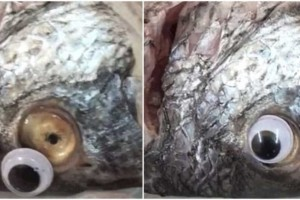 Ιδιοκτήτης εστιατορίου κολλούσε ψεύτικα πλαστικά μάτια στα ψάρια για να φαίνονται φρέσκα!