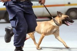 Χανιά: Σκύλος του Λιμενικού εντόπισε 1,8 κιλά κάνναβης!