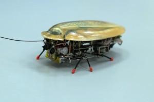 Έφτιαξαν κατσαρίδα... ρομπότ που δεν πεθαίνει ποτέ! (Video)