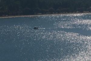 Εικόνα σοκ: Δελφίνι σε κατάσταση αποσύνθεσης εντοπίστηκε σε παραλία της Χαλκιδικής!