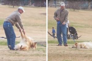 Η ξεκαρδιστική στιγμή που ένας σκύλος το παίζει πεθαμένος για να μείνει περισσότερο στο πάρκο!