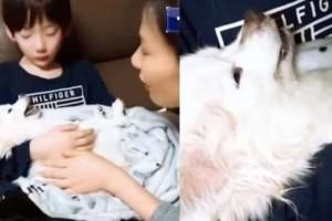 Θα δακρύσετε: Αγόρι κρατάει αγκαλιά το σκυλάκο του που πεθαίνει και η μητέρα του του τραγουδάει!