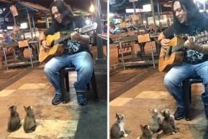Έπαιζε μουσική μόνος του στον δρόμο και όλοι τον αγνοούσαν! Μέχρι που εμφανίστηκαν αυτά τα 4 γατάκια!
