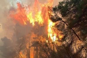 Τραγικό: Οι πρόσφατες πυρκαγιές έκαψαν σχεδόν 7.500 στρέμματα στη Ζάκυνθο και 3.000 στο Λουτράκι
