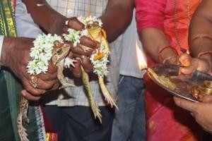 Ινδία: Πάντρεψαν βατράχια για να βρέξει! Τώρα τα χωρίζουν επειδή πλημμύρισαν!
