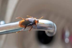 3 φυσικοί τρόποι για να διώξετε για πάντα τις κατσαρίδες από το σπίτι της!