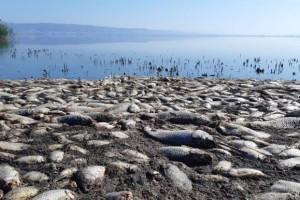 Νεκρά ψάρια και χαμηλή στάθμη στη λίμνη Κορώνεια!
