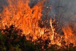 Φωτιά ξέσπασε πριν λίγο στην Κέρκυρα!