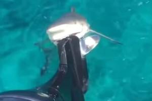 Απίστευτο περιστατικό: Καρχαρίας άρπαξε μηχανή σκάφους!