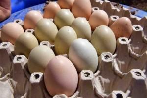 Συμβαίνει μια φορά στα 25.000.000: Αγόρασε αυγά από το σούπερ μάρκετ και αντίκρισε αυτό! (photo)