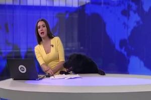 Σκύλος μπουκάρει σε πλατό και καταστρέφει το δελτίο ειδήσεων με τον πιο χαριτωμένο τρόπο! (Video)