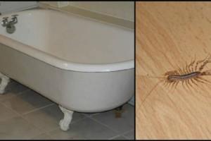 Προσοχή: Αυτός είναι ο λόγος που δεν πρέπει να σκοτώνετε μια σαρανταποδαρούσα στο σπίτι σας!