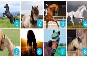 Tεστ: Ποιο άλογο σου αρέσει πιο πολύ; Διαλέξτε αυτό που σας τραβάει περισσότερο την προσοχή!