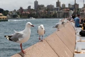 Το γνωρίζατε; Αυτό είναι το ζώο από την Αυστραλία που μεταφέρει βακτήρια ανθεκτικά στα φάρμακα!