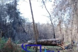 Ηλεία: Και δεύτερος νεκρός εντοπίστηκε στο δάσος Στροφυλιάς!