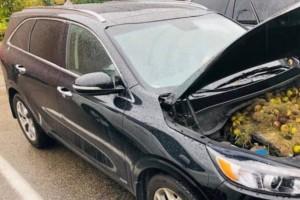Άκουσαν θόρυβο στο αυτοκίνητό τους! «Πάγωσαν» μόλις άνοιξαν το καπό! (photos)