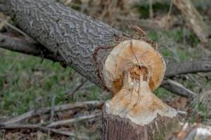 Τραγωδία στα Καλάβρυτα: Νεκρός 25χρονος - Καταπλακώθηκε από δέντρο!