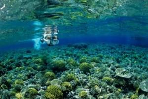 Το υποβρύχιο θαύμα βρίσκεται στην Ελλάδα και είναι μαγευτικό! Αποθέωση από την Telegraph!