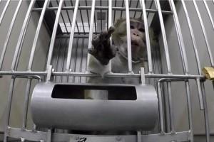 Φρίκη! Θυμό προκαλούν οι εικόνες κακοποίησης ζώων σε εργαστήρι στην Γερμανία! (Βίντεο)