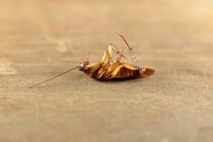 2+1 φυσικοί τρόποι για να ξεφορτωθείτε τις κατσαρίδες για πάντα!