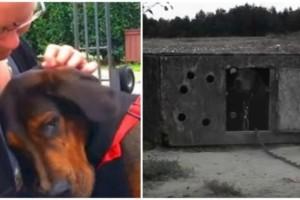Αυτό το σκυλάκι ήταν κλειδωμένο και κακοποιημένο. Δείτε την αντίδραση του μόλις τον αγκαλιάζουν για πρώτη φορά! (Βίντεο)