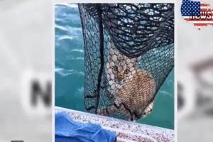 Απίστευτο: Πήγε για ψάρι και έβγαλε... αγριόγατα! (Video)