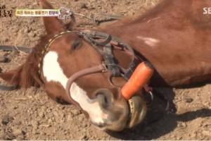 Άλογο παριστάνει το νεκρό κάθε φορά που πάει κάποιος να το ιππεύσει! (Βίντεο)