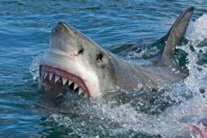 Καρχαρίας κατασπάραξε μια μητέρα μπροστά στα μάτια του 6χρονου γιου της!