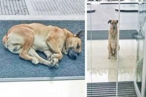 Στεναχωρημένο σκυλάκι κάθεται έξω από ξενοδοχείο για 6 μήνες. Όμως όταν κατάλαβε ποιον περίμενε...