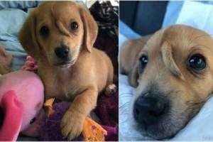 Αξιαγάπητο: Αυτό το σκυλάκι ήταν εγκαταλελειμμένο - Όταν το βρήκε ένας άντρας για να το σώσει είδε ότι έχει μια επιπλέον ουρά στο κεφάλι