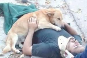 Ραγίζει καρδιές το σκυλάκι που δεν αποχωρίζεται τον τραυματισμένο ιδιοκτήτη του!