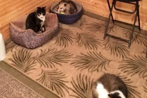Αυτή η γιαγιά πίστευε για χρόνια ότι φρόντιζε 3 γάτες - Μια μέρα ο εγγονός της κατάλαβε ότι η τρίτη δεν έχει καμιά σχέση με γάτα!