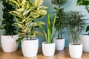 Αυτό το φυτό που έχουμε σπίτι μας σκοτώνει τον καρκίνο!
