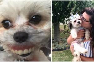 Σκύλος φοράει την μασέλα ενός άνδρα και... χαμογελάει δείχνοντας τα καινούρια του δόντια!