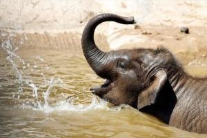 Σοκ: Ελέφαντας επιτέθηκε σε 5 ανθρώπους και τους σκότωσε!