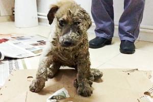 Τύποι γέμισαν με κόλλα τα πόδια σκύλου και το άφησαν να πεθάνει! Λίγο μετά εκείνο έκανε το... απίθανο!