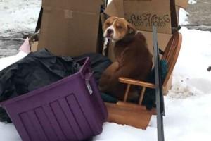 Μια οικογένεια μετακόμισε και άφησε τον σκύλο στα σκουπίδια. Ωστόσο εκείνος...