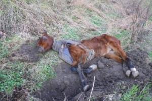 Αυτό το σκελετωμένο άλογο ήταν εγκαταλελειμένο...Η μεταμόρφωή του θα σας συγκινήσει!