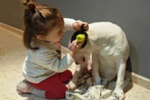 Αυτό το κορίτσι παίζει τον γιατρό με τον σκύλο της. Ωστόσο την αντίδραση του σκύλου δεν την περίμενε κανείς...