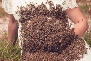 20.000 μέλισσες μαζεύτηκαν πάνω στην κοιλιά μιας εγκύου! Ο λόγος θα σας σοκάρει!